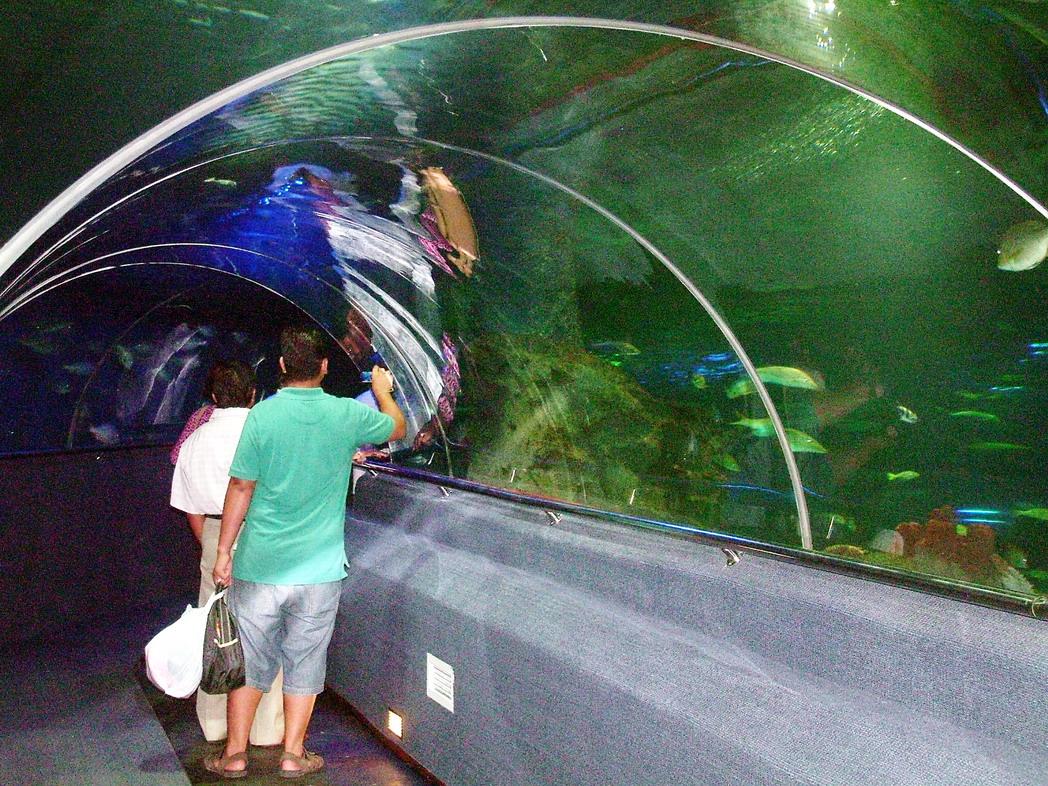 Cá trong  đại dương Vinpearl